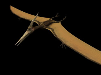 Animal 3d Max Model Pteranodon Dinosaur