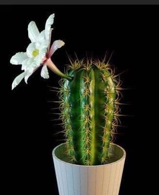 Valkoinen kukka kaktus