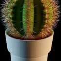 The Potted Plants Cactus 3dsMax Model