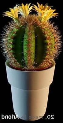 Ruukkukasvien kaktus