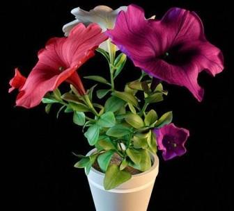 Ruukkukasvit värikkäitä violetteja kukkia
