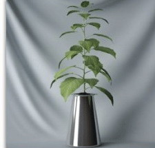 Plant Bonsai Tony Plant 3d Max Model Free