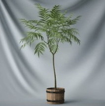 Bonsai Plants Indoor Tree 3d Max Model Free