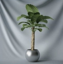 Plant Bonsai  3d Max Model Tree Leaves