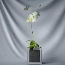 Kasvien Bonsai vihreät kukat