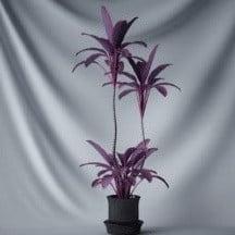 Kasvien Bonsai Violetti Kukkia
