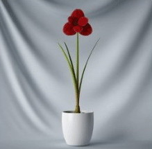 Bonsai pieni kukka
