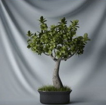 Japanese Bonsai Plant 3d Max Model
