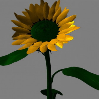 Sunflower 3d Max Model Free