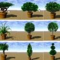 Planta de árbol de jardín