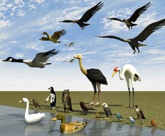 Jotkut linnut pingviini-kattohaikara-korppikotka ...