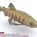 11 Fish Set