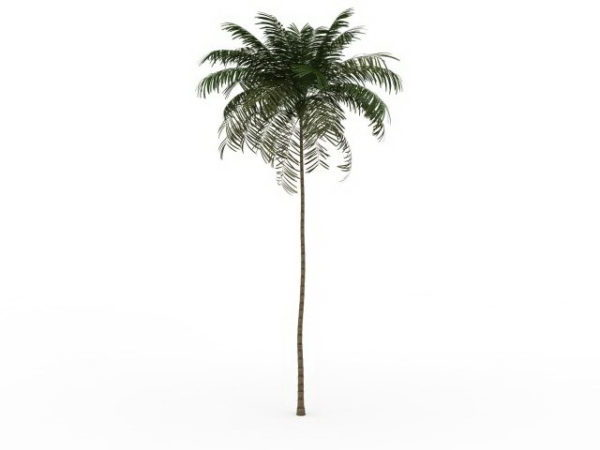 Tall Thin Palm Tree