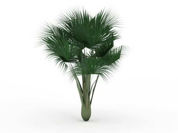 Sea Coconut Palm Tree