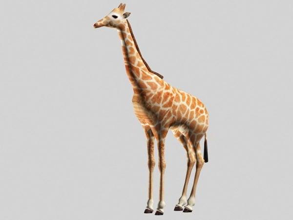 Kaunis kirahvi
