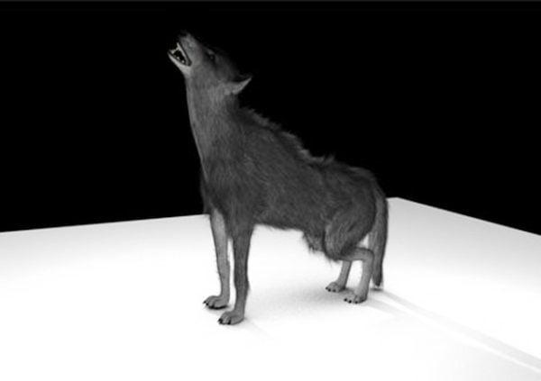 Black Wolf Rig