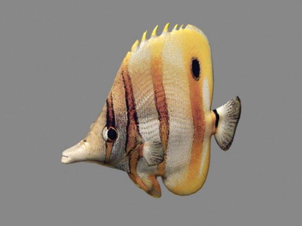 أسماك المحيط المتحركة