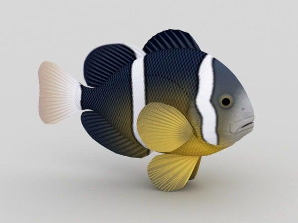 Raidallinen trooppinen kala