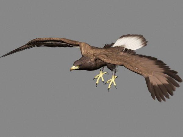 Animación del águila real