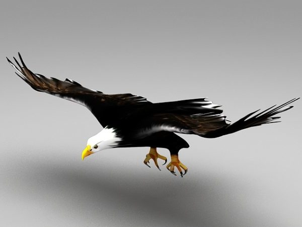 Eagle Flying -animaatio