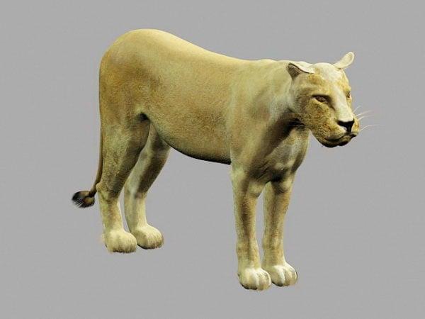 Afrikkalainen leijona