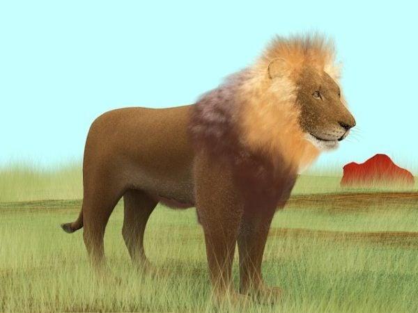 Prairie-leijona