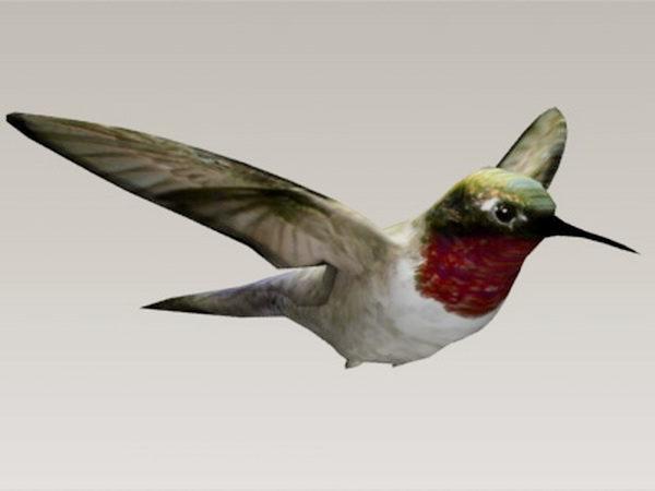 طائر الطنان