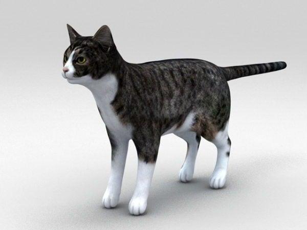 كلاسيكي العتابي القط