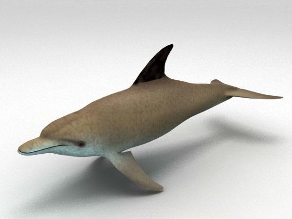 Etelä-Aasian joen delfiini