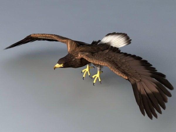 Flying Eagle Animation