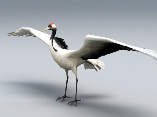 Red Crane Bird
