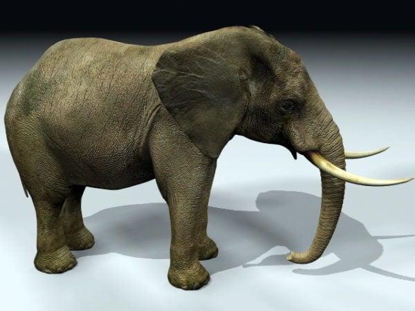 الفيل الهائل
