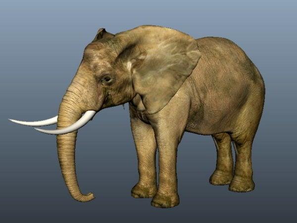 فيل آسيوي