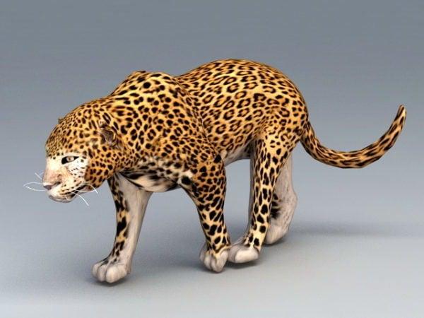 Afrikkalainen leopardi