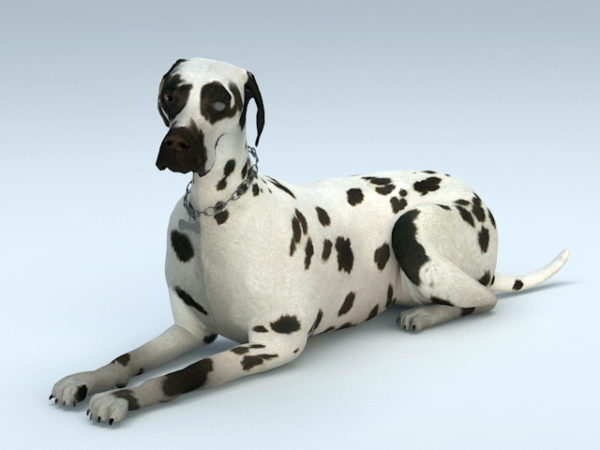 Dalmatian koiraeläin