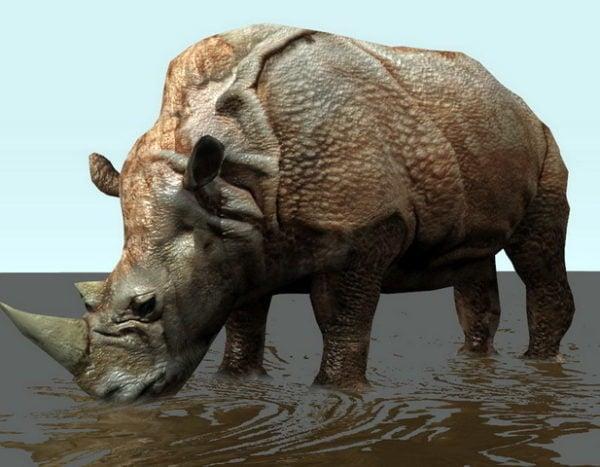 Rinoceronte Con Aparejo