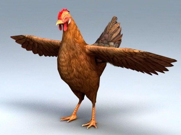 Pollo hembra