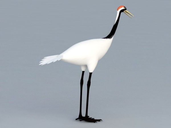 الطيور كرين الآسيوية
