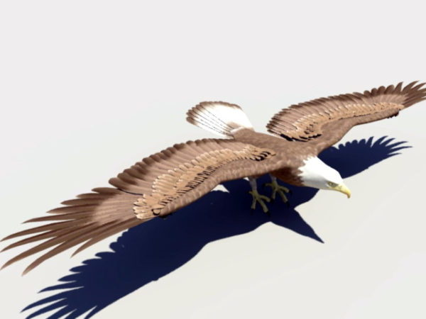 Águila calva animal Rigged