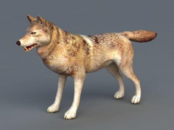 Realistic Arabian Wolf