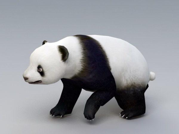 Animated Panda Bear Rig