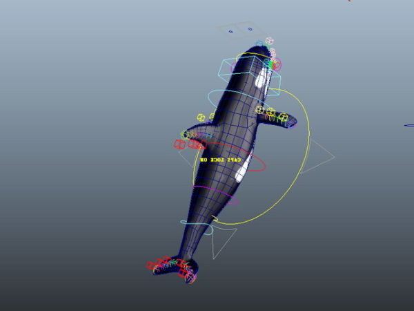 Killer Whale-Animoitu Rig