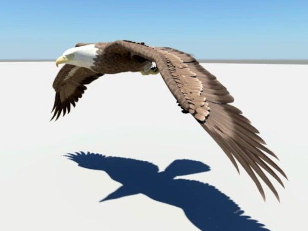Águila volando animado Rigged