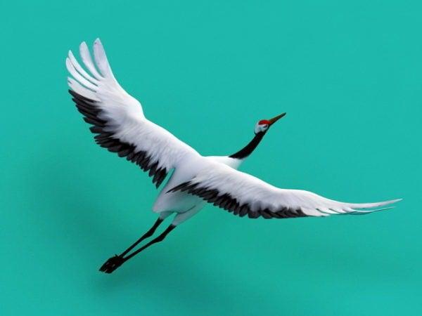 Crane Animal Flying الرسوم المتحركة