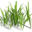 Stout bambugräs