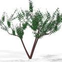Gård Lille træ