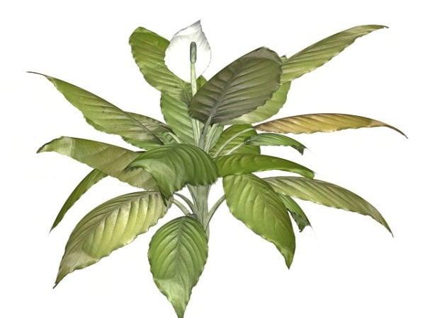 Piante Da Interno 3d.Peace Lily Indoor Plant Gratis Modello 3d Max Open3dmodel 40099