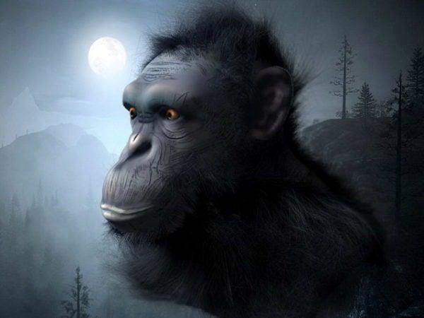 Simpanssin pää