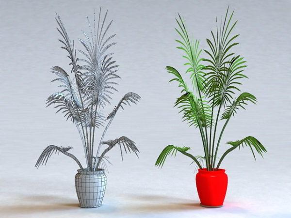 Ruukkukas palmu