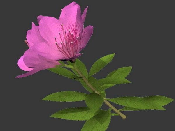 زهرة زهرية